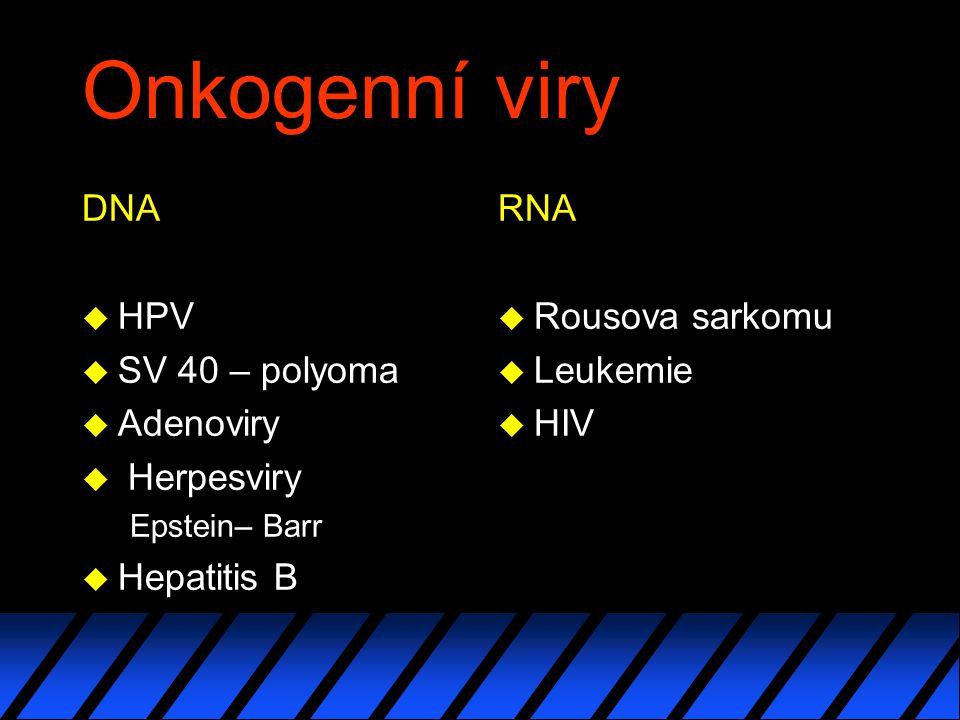Onkogenní viry DNA u HPV u SV 40 – polyoma u Adenoviry u Herpesviry Epstein– Barr u Hepatitis B RNA u Rousova sarkomu u Leukemie u HIV