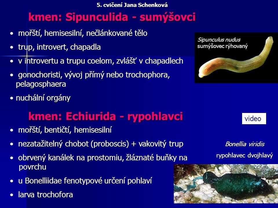 kmen: Annelida - kroužkovci mořští, sladkovodní, terestričtí prostomium, homonomně segmentovaný trup, pygidium coelom - párové váčky v článcích odděleny střevem a mezenteriemi, na povrchu peritoneum epidermis, svalový vak NS žebříčková - nadhltanové ganglion, 2 ventrální provazce, komisury, konektivy a ganglia v každém článku CS uzavřená VS většinou metanefridia, chloragogenní tkáň rozmnožování - hermafrodité, architomie, paratomie, někdy larva trochofora 5.