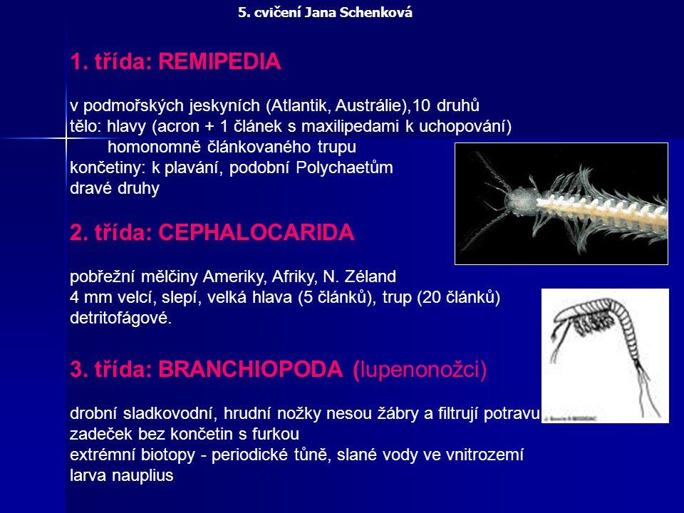 1. třída: REMIPEDIA v podmořských jeskyních (Atlantik, Austrálie),10 druhů tělo: hlavy (acron + 1 článek s maxilipedami k uchopování) homonomně článko