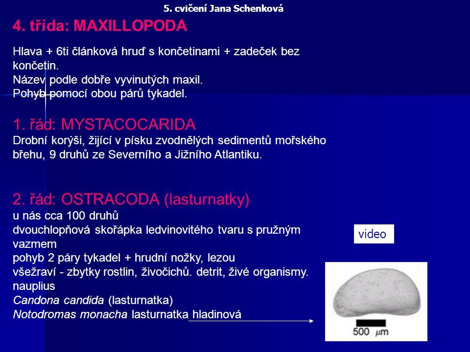 4. třída: MAXILLOPODA Hlava + 6ti článková hruď s končetinami + zadeček bez končetin. Název podle dobře vyvinutých maxil. Pohyb pomocí obou párů tykad