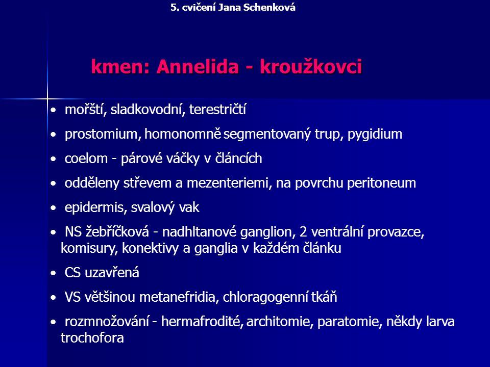 kmen: Annelida - kroužkovci mořští, sladkovodní, terestričtí prostomium, homonomně segmentovaný trup, pygidium coelom - párové váčky v článcích odděle