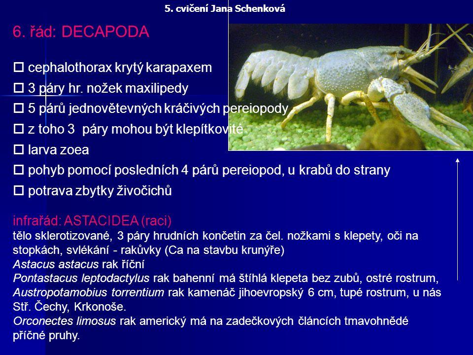 6. řád: DECAPODA o cephalothorax krytý karapaxem o 3 páry hr. nožek maxilipedy o 5 párů jednovětevných kráčivých pereiopody o z toho 3 páry mohou být