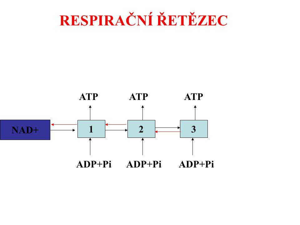 RESPIRAČNÍ ŘETĚZEC NADH2123 ADP+Pi ATP NAD+