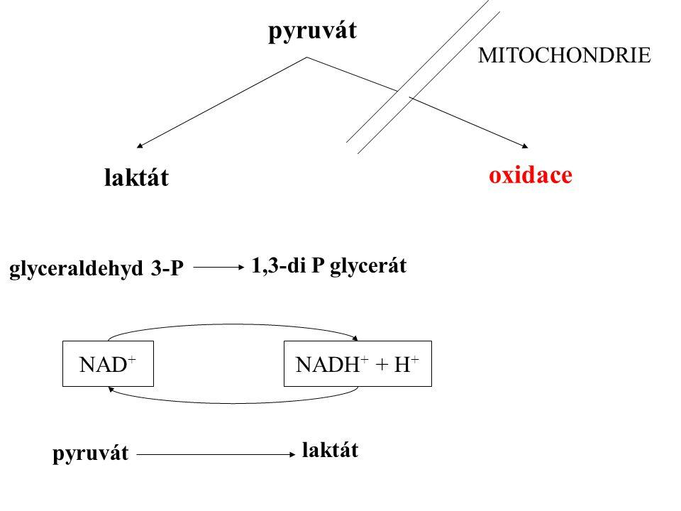 pyruvát oxidace laktát MITOCHONDRIE NADH + + H + NAD + 1,3-di P glycerát glyceraldehyd 3-P pyruvát laktát