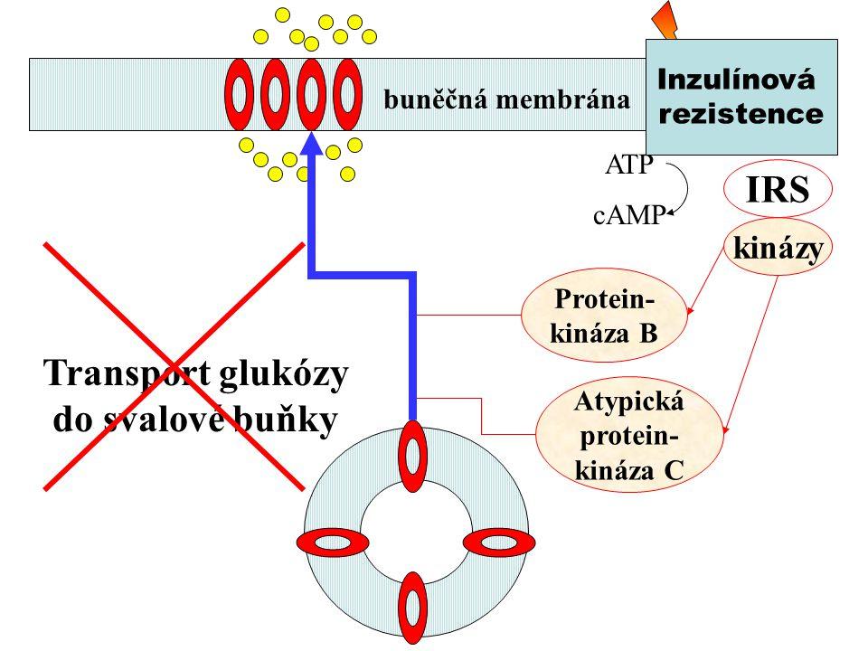 ATP cAMP IRS kinázy Protein- kináza B Transport glukózy do svalové buňky Atypická protein- kináza C buněčná membrána Inzulínová rezistence