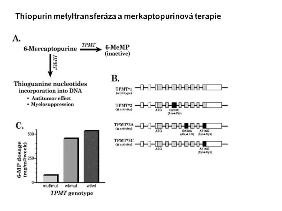 Thiopurin metyltransferáza a merkaptopurinová terapie