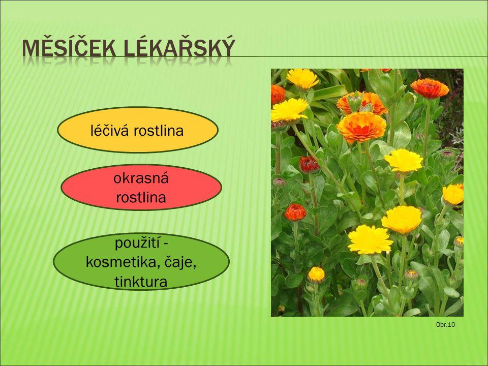 Obr.10 léčivá rostlina použití - kosmetika, čaje, tinktura okrasná rostlina