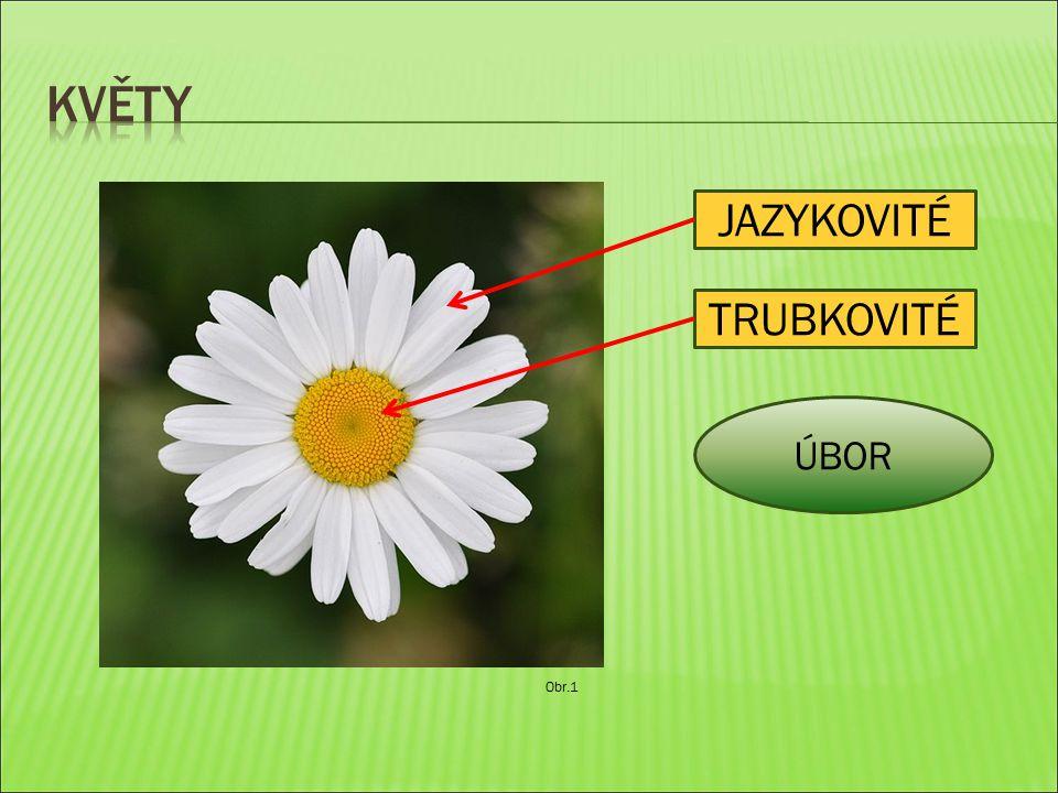 TRUBKOVITÉ ÚBOR JAZYKOVITÉ Obr.1