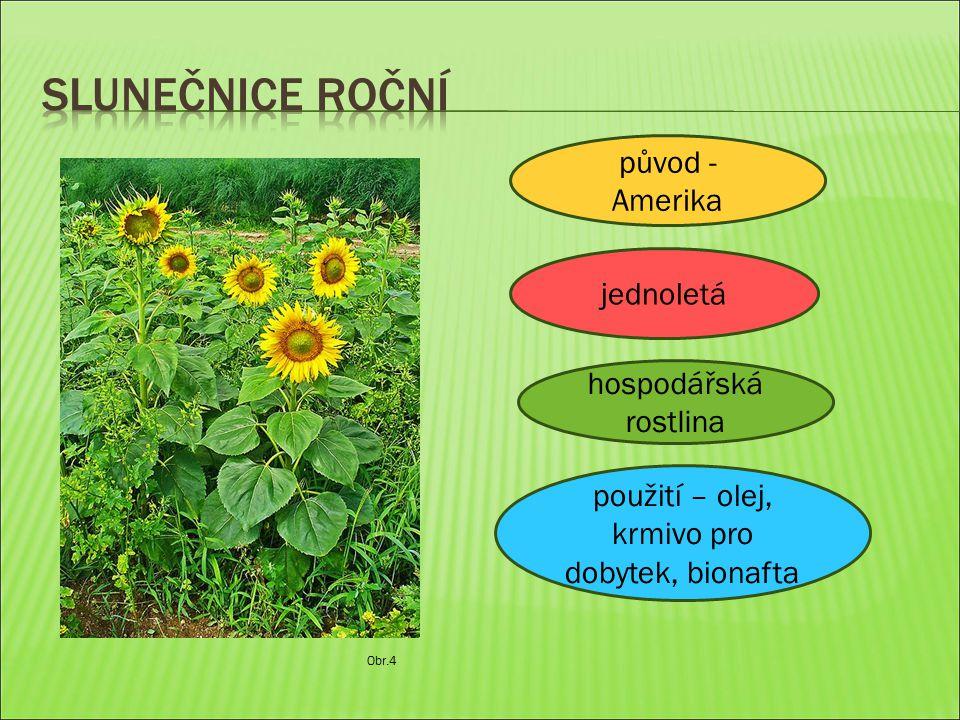 Obr.4 jednoletá hospodářská rostlina původ - Amerika použití – olej, krmivo pro dobytek, bionafta
