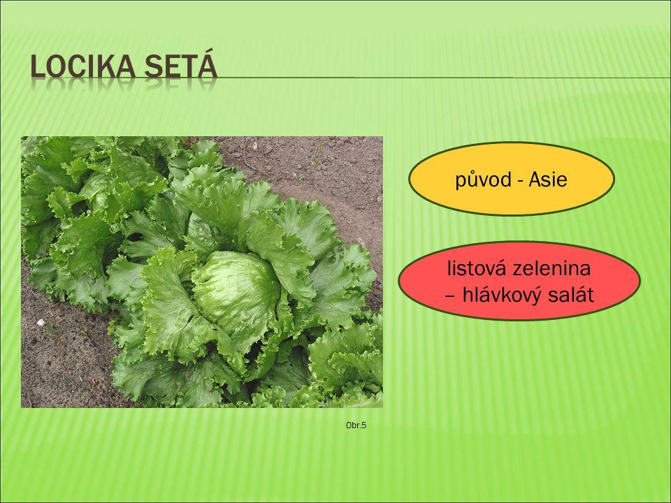 Obr.5 původ - Asie listová zelenina – hlávkový salát