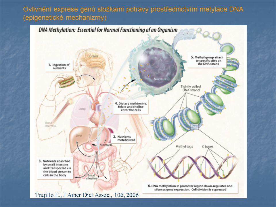 Trujillo E., J Amer Diet Assoc., 106, 2006 Ovlivnění exprese genů složkami potravy prostřednictvím metylace DNA (epigenetické mechanizmy)