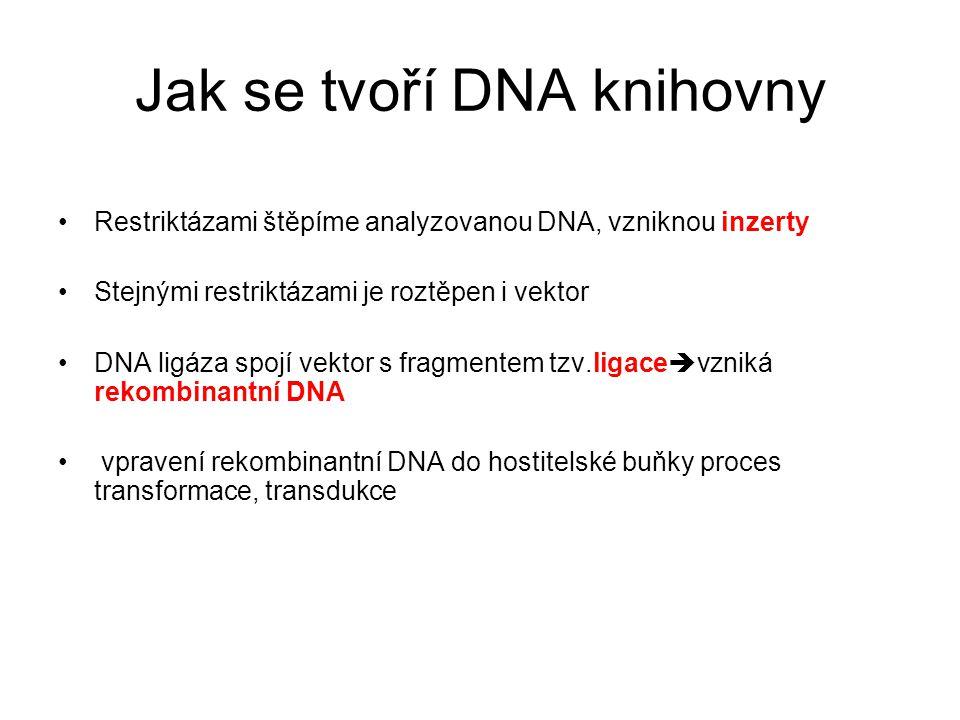 Jak se tvoří DNA knihovny Restriktázami štěpíme analyzovanou DNA, vzniknou inzerty Stejnými restriktázami je roztěpen i vektor DNA ligáza spojí vektor