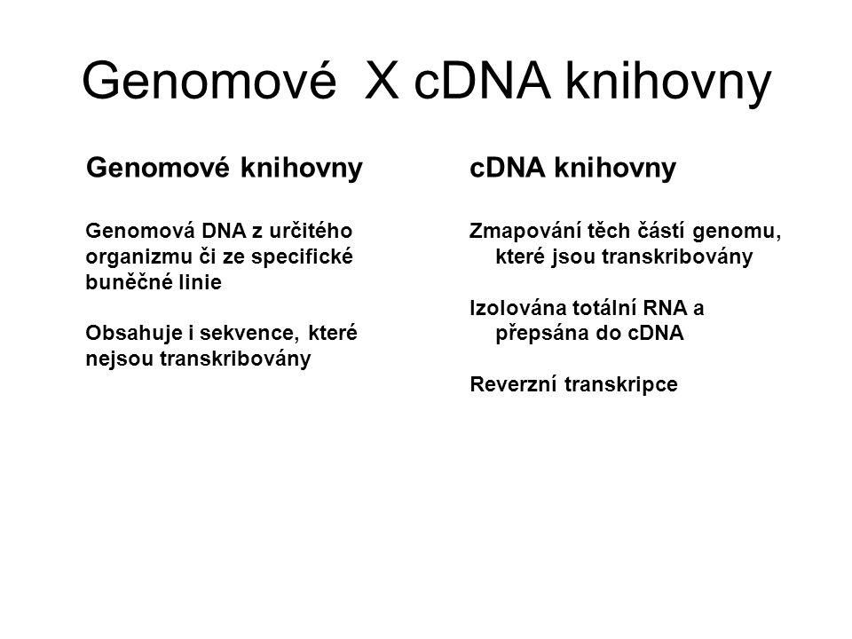 Genomové X cDNA knihovny cDNA knihovny Zmapování těch částí genomu, které jsou transkribovány Izolována totální RNA a přepsána do cDNA Reverzní transk