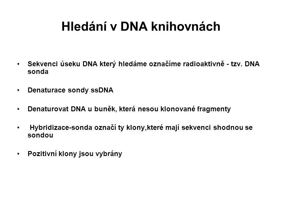 Hledání v DNA knihovnách Sekvenci úseku DNA který hledáme označíme radioaktivně - tzv. DNA sonda Denaturace sondy ssDNA Denaturovat DNA u buněk, která