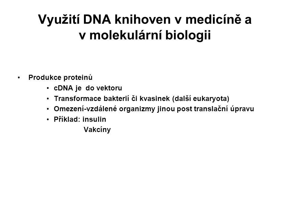 Využití DNA knihoven v medicíně a v molekulární biologii Produkce proteinů cDNA je do vektoru Transformace bakterií či kvasinek (další eukaryota) Omez