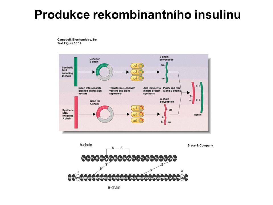 Produkce rekombinantního insulinu