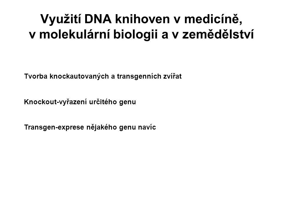 Využití DNA knihoven v medicíně, v molekulární biologii a v zemědělství Tvorba knockautovaných a transgenních zvířat Knockout-vyřazení určitého genu T