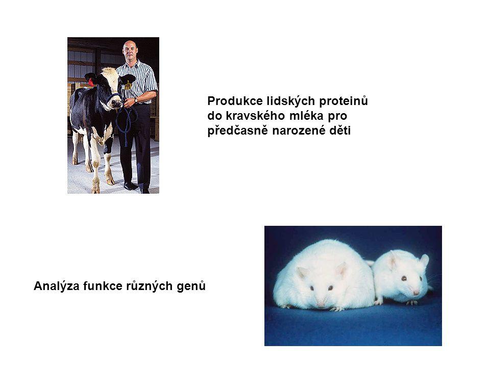 Produkce lidských proteinů do kravského mléka pro předčasně narozené děti Analýza funkce různých genů