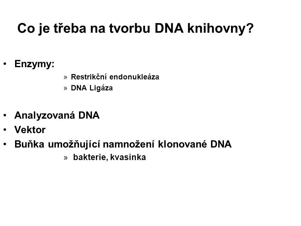 Co je třeba na tvorbu DNA knihovny? Enzymy: »Restrikční endonukleáza »DNA Ligáza Analyzovaná DNA Vektor Buňka umožňující namnožení klonované DNA » bak