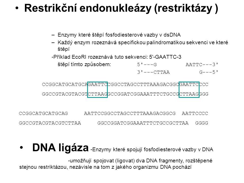 Restrikční endonukleázy (restriktázy ) –Enzymy které štěpí fosfodiesterové vazby v dsDNA –Každý enzym rozeznává specifickou palindromatikou sekvenci v