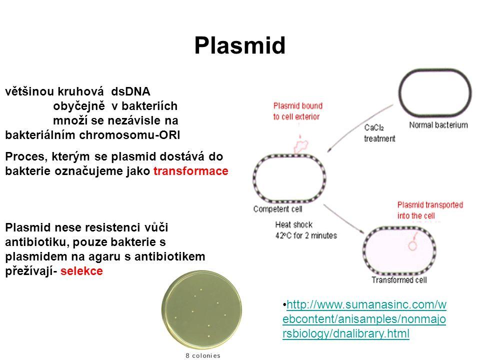 Plasmid většinou kruhová dsDNA obyčejně v bakteriích množí se nezávisle na bakteriálním chromosomu-ORI Proces, kterým se plasmid dostává do bakterie o
