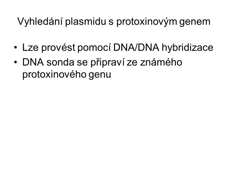 Vyhledání plasmidu s protoxinovým genem Lze provést pomocí DNA/DNA hybridizace DNA sonda se připraví ze známého protoxinového genu