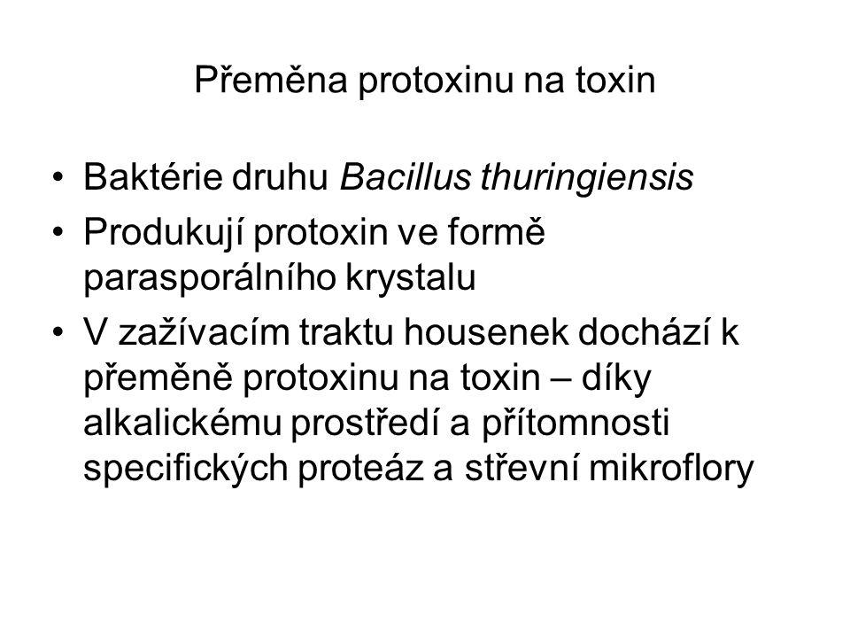 Přeměna protoxinu na toxin Baktérie druhu Bacillus thuringiensis Produkují protoxin ve formě parasporálního krystalu V zažívacím traktu housenek dochází k přeměně protoxinu na toxin – díky alkalickému prostředí a přítomnosti specifických proteáz a střevní mikroflory