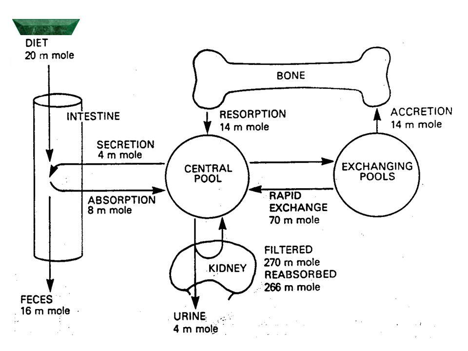 Schéma idealizované savčí buňky s lokalizací hlavních mechanismů zajišťujících homeostázu Ca.