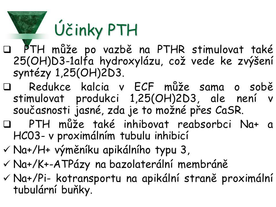 Účinky PTH  PTH může po vazbě na PTHR stimulovat také 25(OH)D3-1alfa hydroxylázu, což vede ke zvýšení syntézy 1,25(OH)2D3.  Redukce kalcia v ECF můž