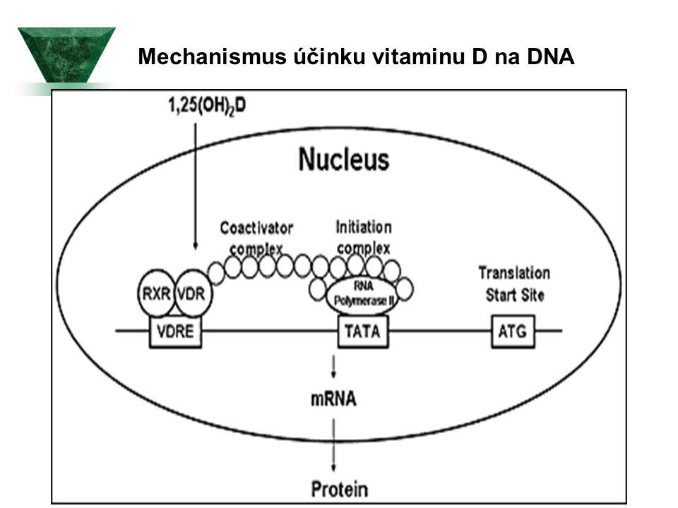 Genová transkripce iniciovaná 1,25(OH)2D (k předchozímu obrázku )  1,25(OH)2D vstupuje do cílových buněk a váže se na jejich receptor VDR.