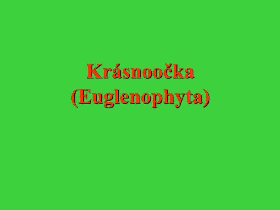 Krásnoočka (Euglenophyta)