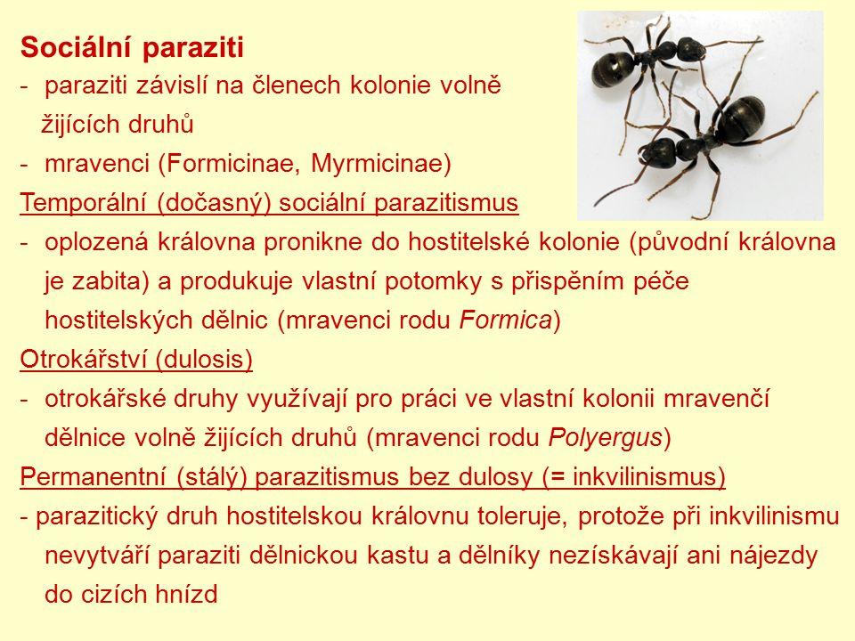 Sociální paraziti -paraziti závislí na členech kolonie volně žijících druhů -mravenci (Formicinae, Myrmicinae) Temporální (dočasný) sociální parazitis