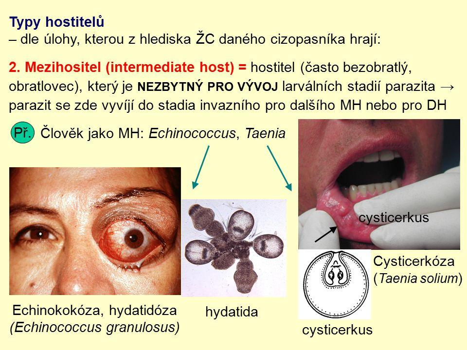 Typy hostitelů – dle úlohy, kterou z hlediska ŽC daného cizopasníka hrají: 2. Mezihositel (intermediate host) = hostitel (často bezobratlý, obratlovec