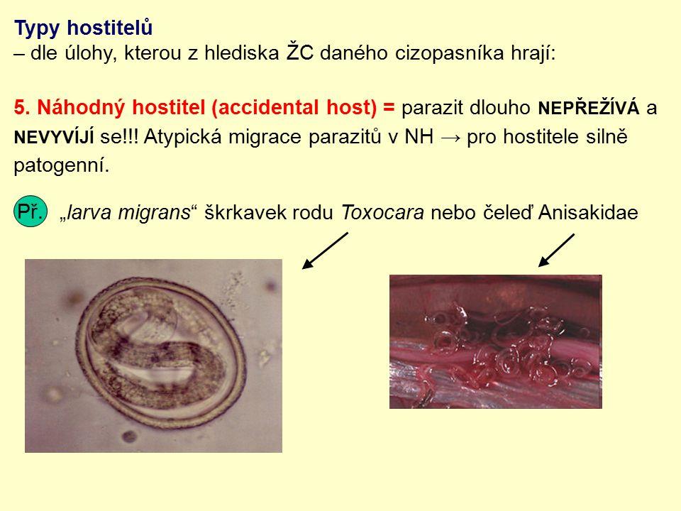 Typy hostitelů – dle úlohy, kterou z hlediska ŽC daného cizopasníka hrají: 5. Náhodný hostitel (accidental host) = parazit dlouho NEPŘEŽÍVÁ a NEVYVÍJÍ