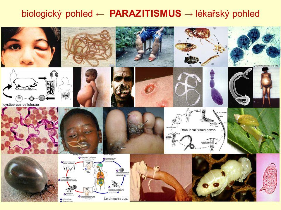Podle lokalizace  Ektoparazit - lokalizace na povrchu těla nebo povrchových orgánech hostitele (např.