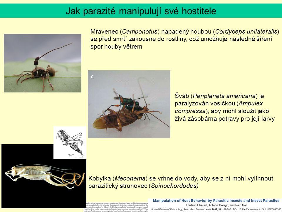 Jak parazité manipulují své hostitele Mravenec (Camponotus) napadený houbou (Cordyceps unilateralis) se před smrtí zakousne do rostliny, což umožňuje