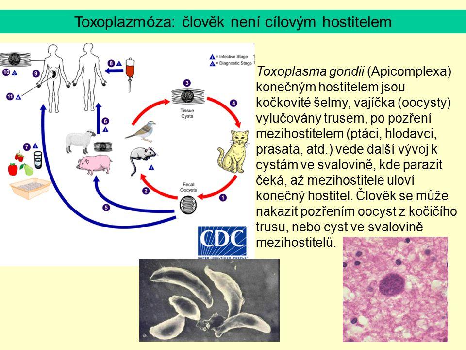 Toxoplasma gondii (Apicomplexa) konečným hostitelem jsou kočkovité šelmy, vajíčka (oocysty) vylučovány trusem, po pozření mezihostitelem (ptáci, hloda