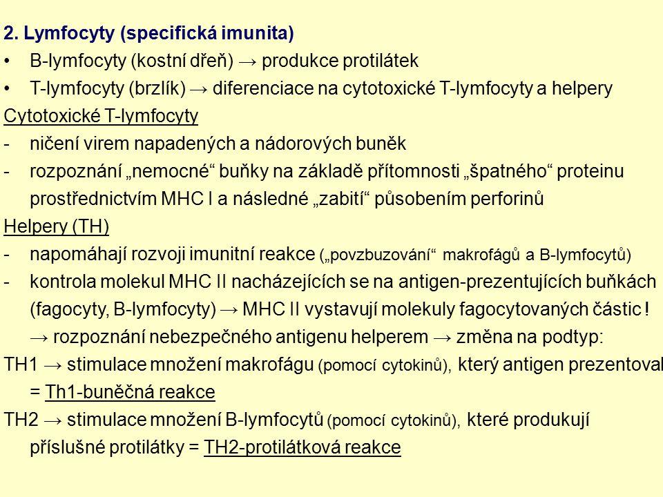 2. Lymfocyty (specifická imunita) B-lymfocyty (kostní dřeň) → produkce protilátek T-lymfocyty (brzlík) → diferenciace na cytotoxické T-lymfocyty a hel