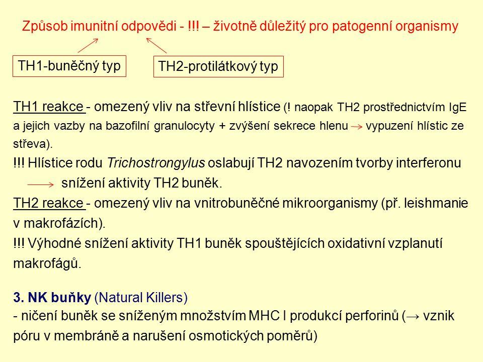 Způsob imunitní odpovědi - !!! – životně důležitý pro patogenní organismy TH1 reakce - omezený vliv na střevní hlístice (! naopak TH2 prostřednictvím
