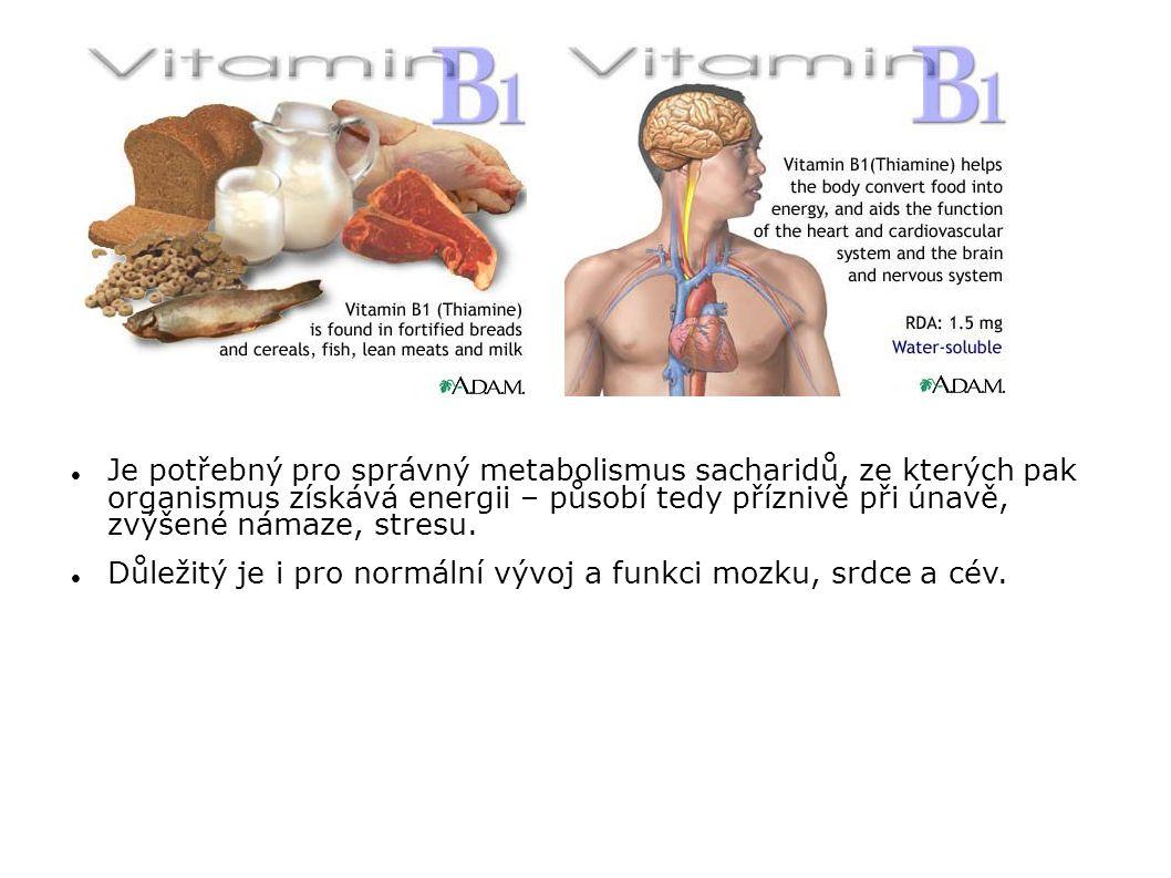 Je potřebný pro správný metabolismus sacharidů, ze kterých pak organismus získává energii – působí tedy příznivě při únavě, zvýšené námaze, stresu. Dů