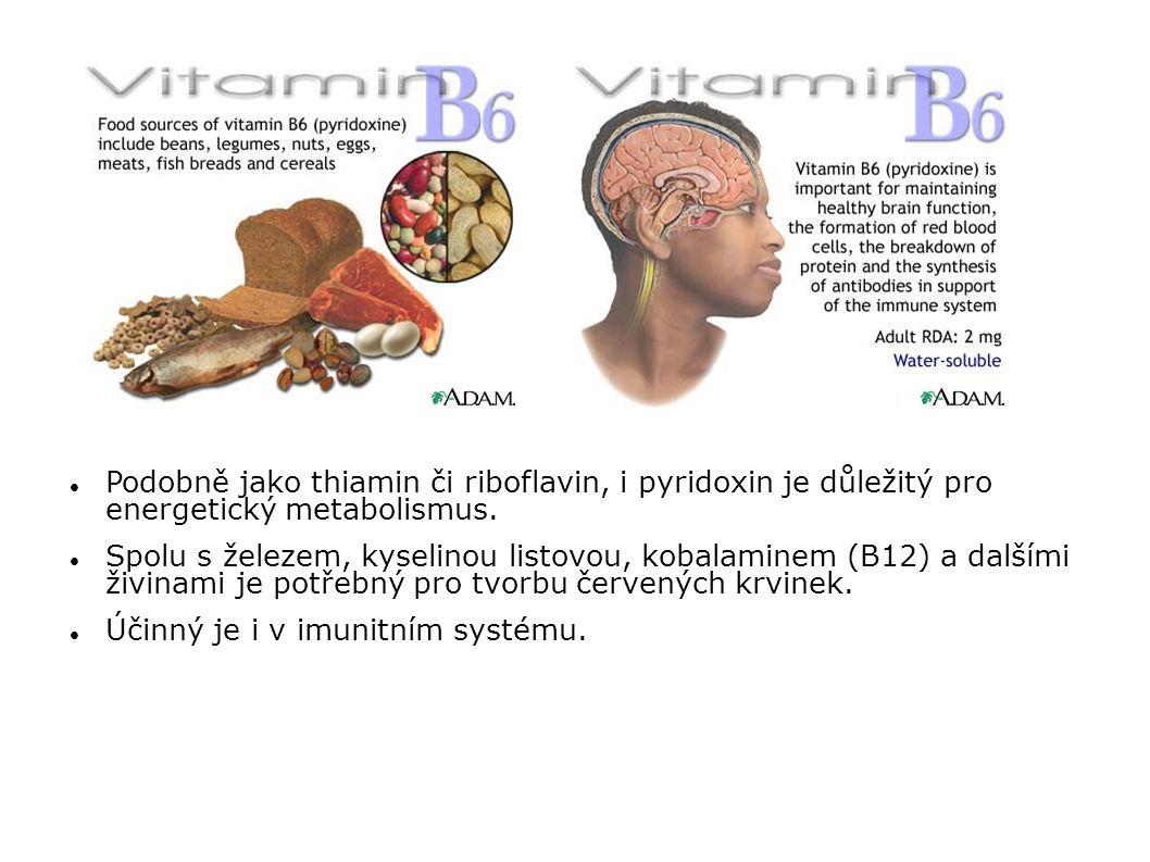 Podobně jako thiamin či riboflavin, i pyridoxin je důležitý pro energetický metabolismus. Spolu s železem, kyselinou listovou, kobalaminem (B12) a dal