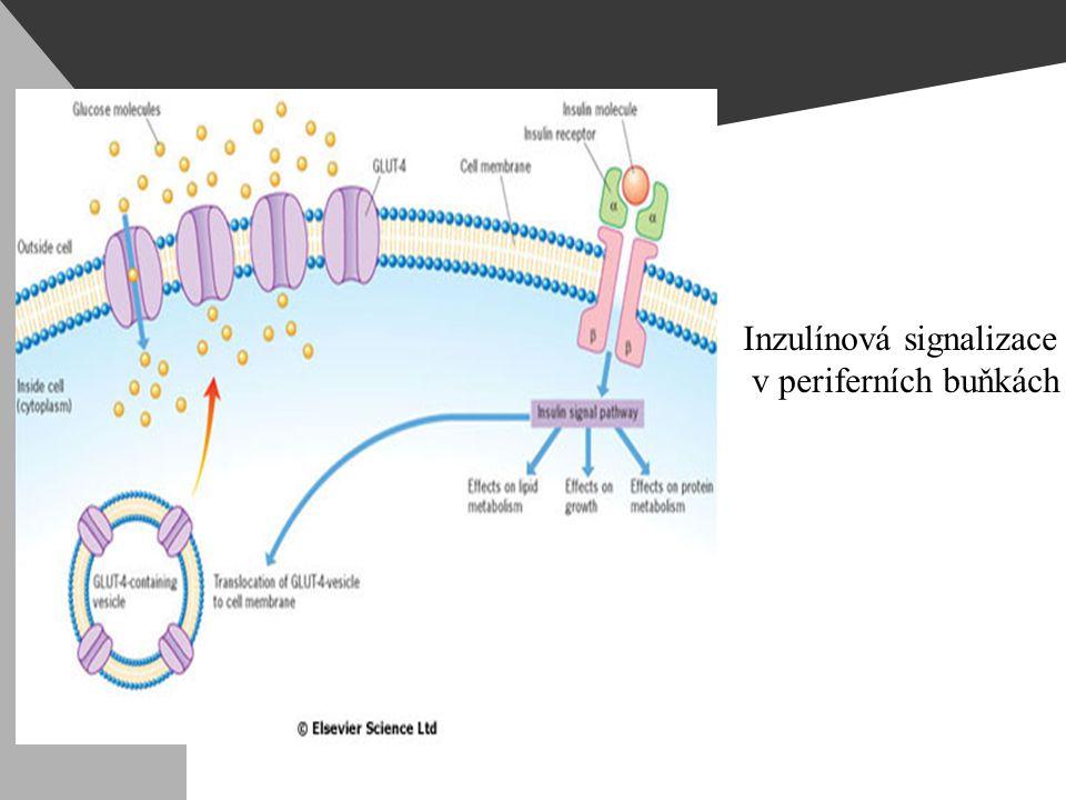 Inzulínová signalizace v periferních buňkách