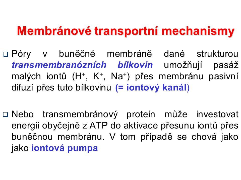 Membránové transportní mechanismy  Póry v buněčné membráně dané strukturou transmembranózních bílkovin umožňují pasáž malých iontů (H +, K +, Na + ) přes membránu pasivní difuzí přes tuto bílkovinu (= iontový kanál)  Nebo transmembránový protein může investovat energii obyčejně z ATP do aktivace přesunu iontů přes buněčnou membránu.