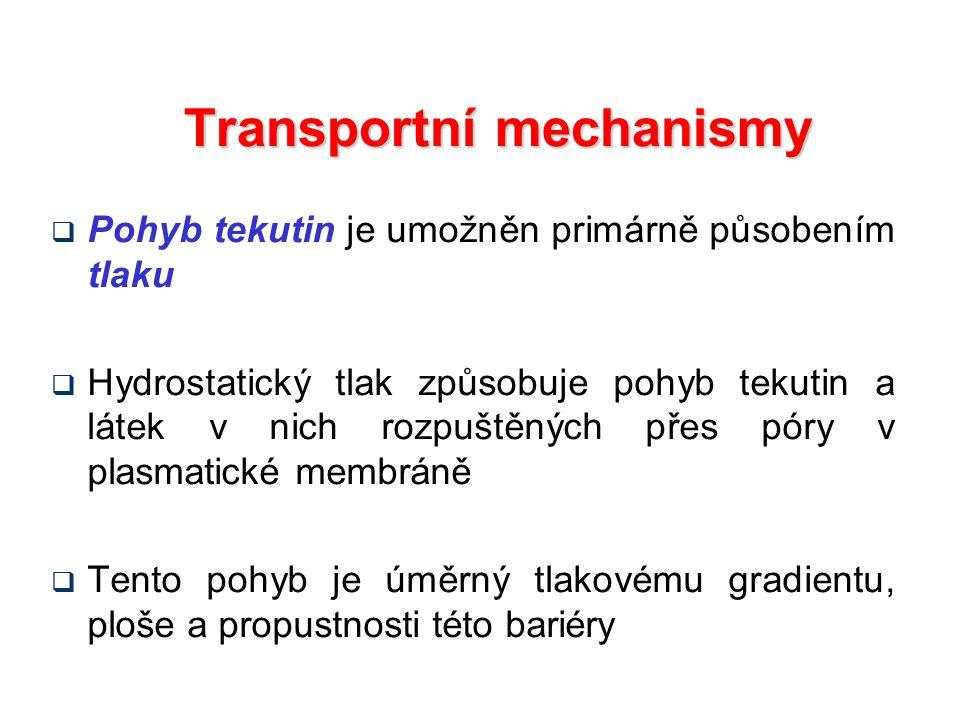 Transportní mechanismy  Pohyb tekutin je umožněn primárně působením tlaku  Hydrostatický tlak způsobuje pohyb tekutin a látek v nich rozpuštěných přes póry v plasmatické membráně  Tento pohyb je úměrný tlakovému gradientu, ploše a propustnosti této bariéry