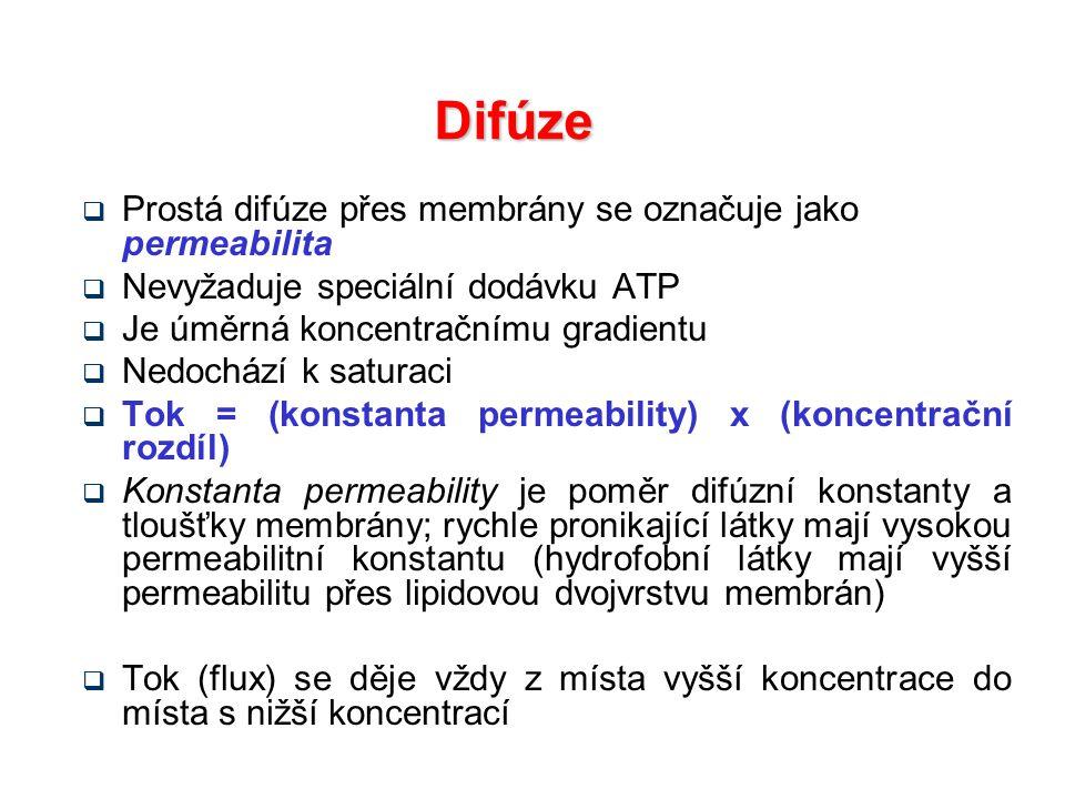 Difúze  Prostá difúze přes membrány se označuje jako permeabilita  Nevyžaduje speciální dodávku ATP  Je úměrná koncentračnímu gradientu  Nedochází k saturaci  Tok = (konstanta permeability) x (koncentrační rozdíl)  Konstanta permeability je poměr difúzní konstanty a tloušťky membrány; rychle pronikající látky mají vysokou permeabilitní konstantu (hydrofobní látky mají vyšší permeabilitu přes lipidovou dvojvrstvu membrán)  Tok (flux) se děje vždy z místa vyšší koncentrace do místa s nižší koncentrací