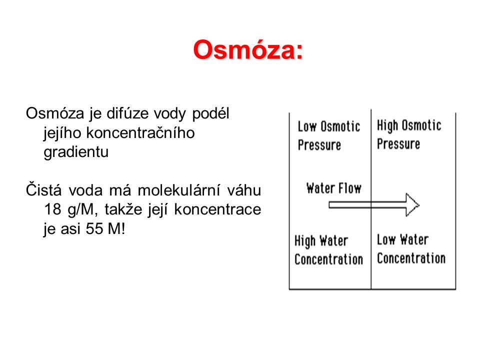 Osmóza: Osmóza je difúze vody podél jejího koncentračního gradientu Čistá voda má molekulární váhu 18 g/M, takže její koncentrace je asi 55 M!