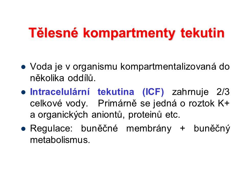 Tělesné kompartmenty tekutin Voda je v organismu kompartmentalizovaná do několika oddílů. Intracelulární tekutina (ICF) zahrnuje 2/3 celkové vody. Pri
