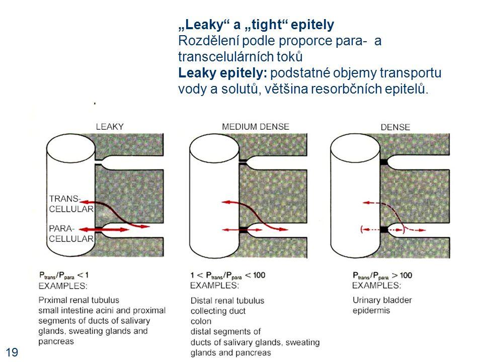 """""""Leaky a """"tight epitely Rozdělení podle proporce para- a transcelulárních toků Leaky epitely: podstatné objemy transportu vody a solutů, většina resorbčních epitelů."""