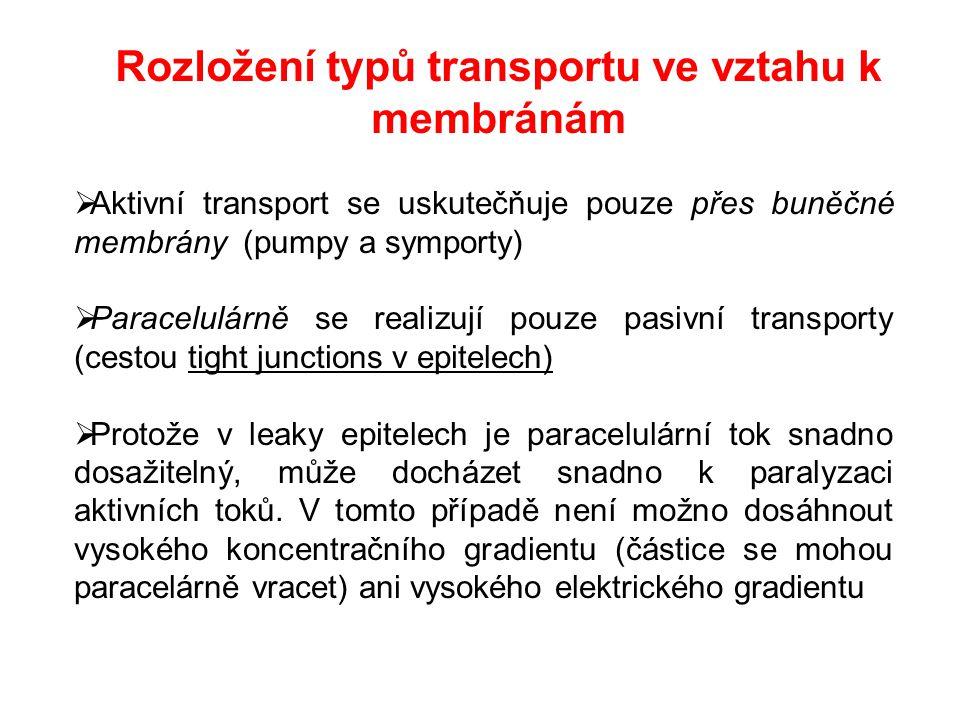  Aktivní transport se uskutečňuje pouze přes buněčné membrány (pumpy a symporty)  Paracelulárně se realizují pouze pasivní transporty (cestou tight junctions v epitelech)  Protože v leaky epitelech je paracelulární tok snadno dosažitelný, může docházet snadno k paralyzaci aktivních toků.
