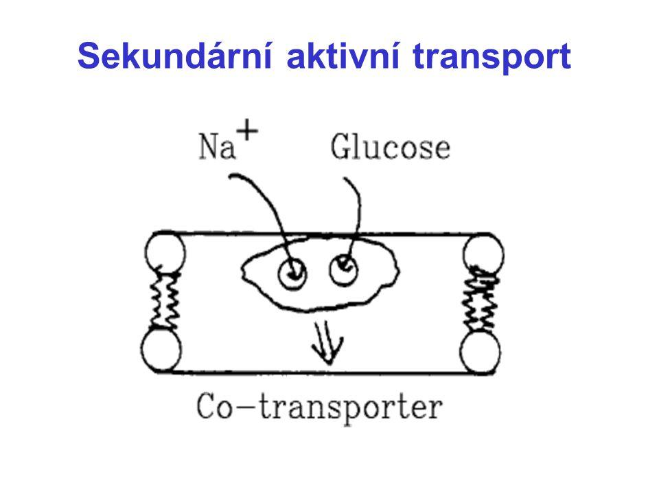 Sekundární aktivní transport